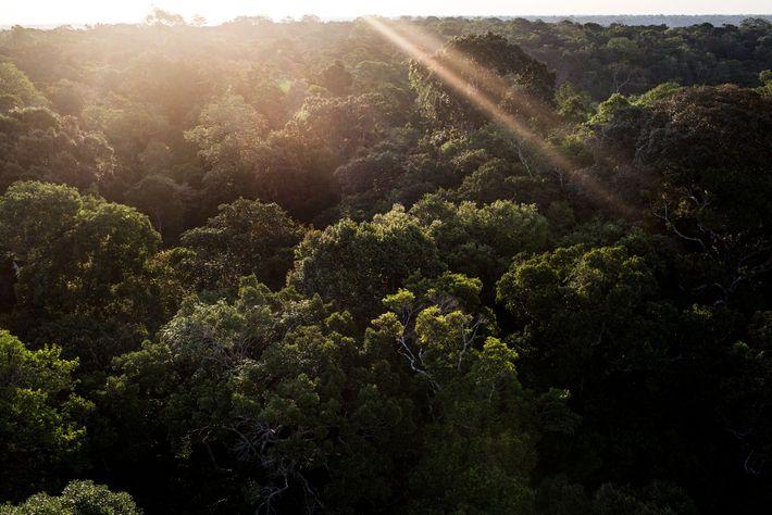 Una torre de acero en el Museo da Amazonia