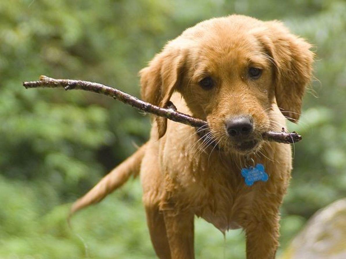 Un cachorro de excursión