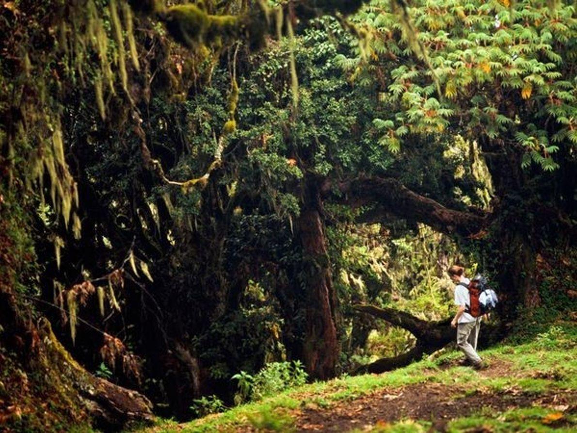 Bosque en el Monte Meru