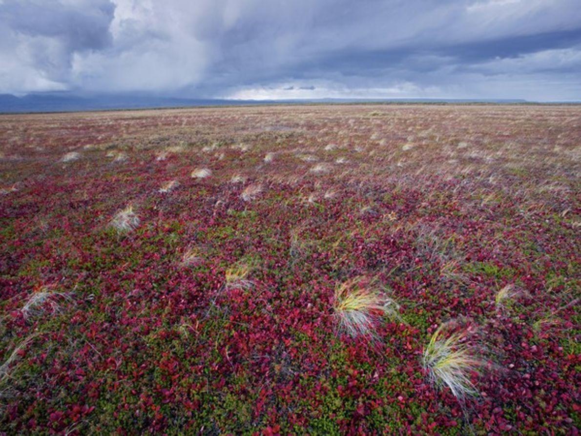 Paisaje de tundra, Rusia