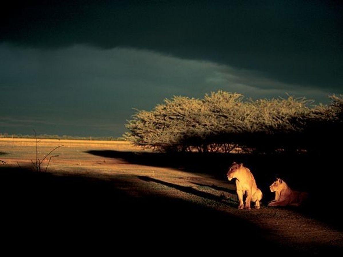 Leonas, Botswana