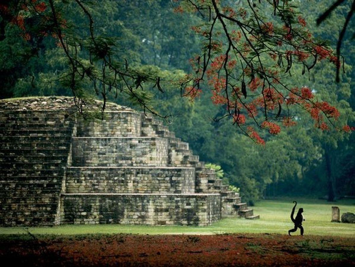 Tumba maya, Honduras