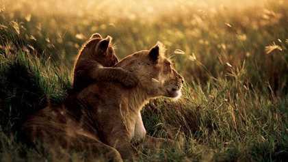 Los animales más adorables