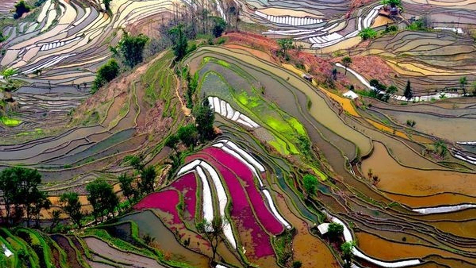 Campos de arroz, China