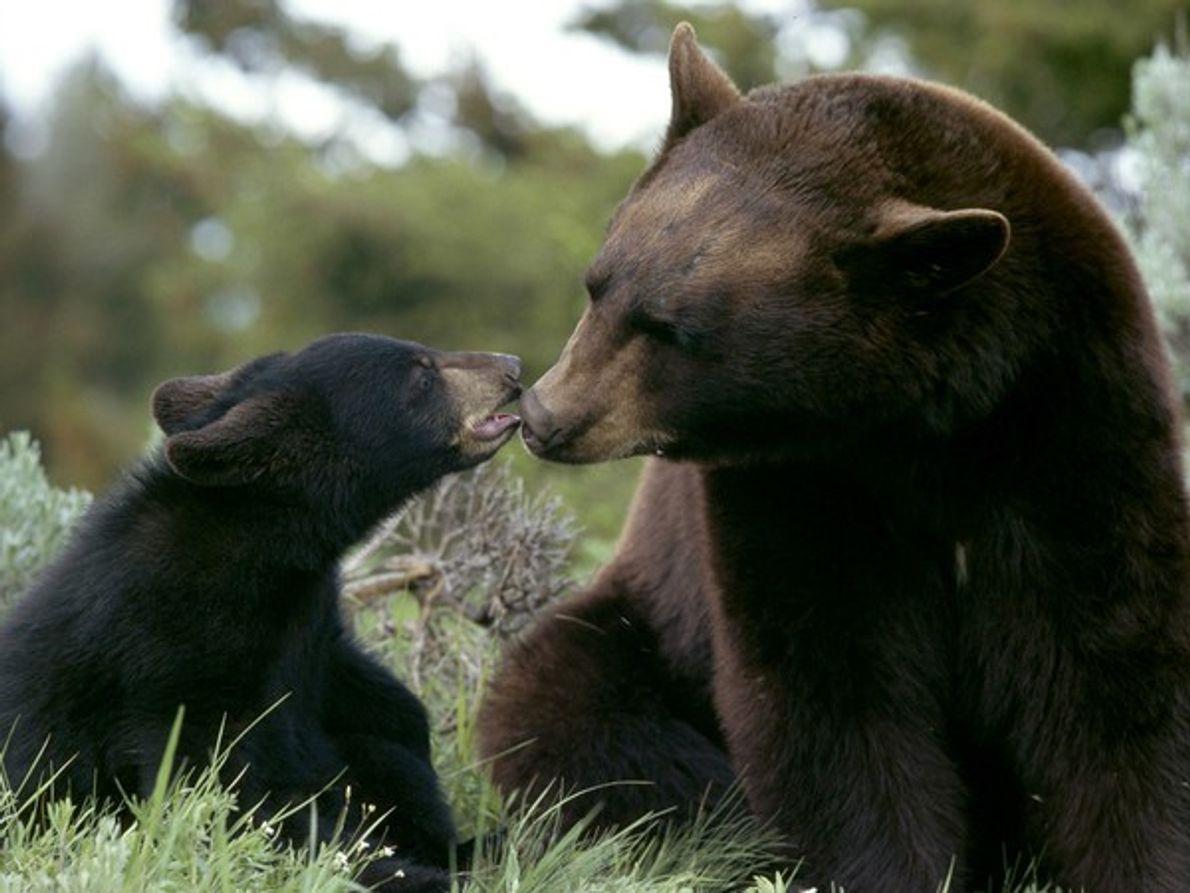 Momentos entrañables de animales con sus crías