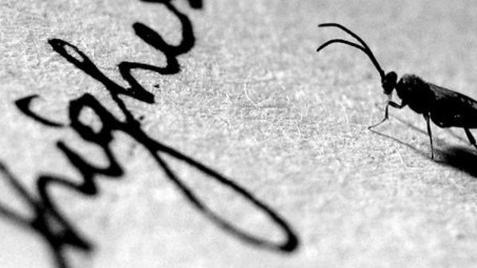 Insectos en papel