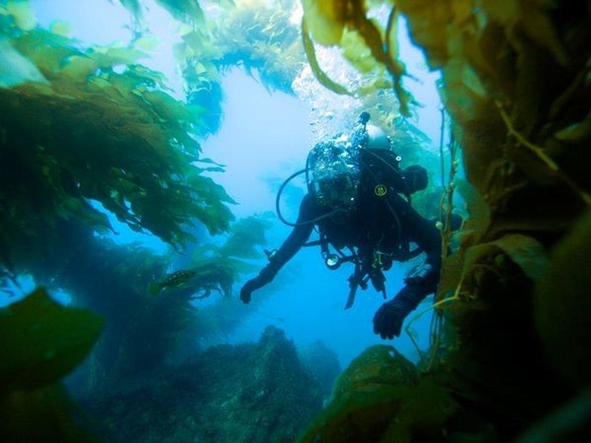 Explorando Isla Catalina