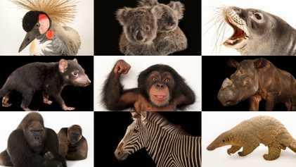 Estos 50 animales están en peligro. Así puedes ayudarlos.