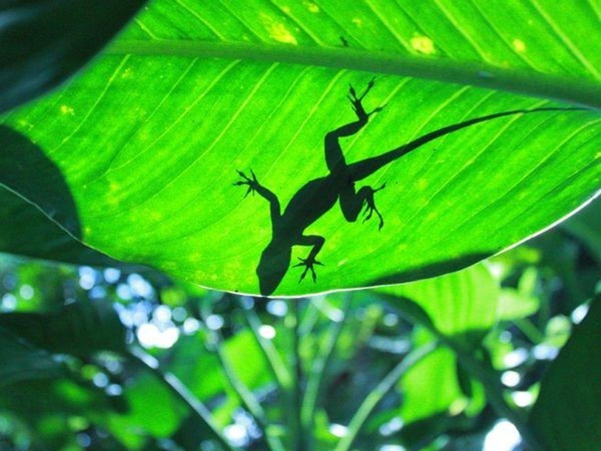 ¿Qué animales podemos encontrar en la selva?