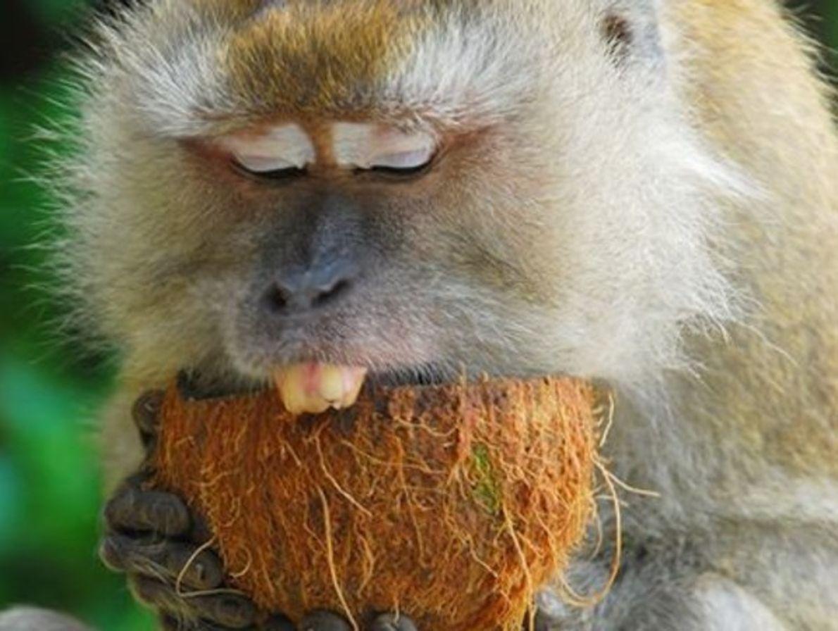 Mono y Coco