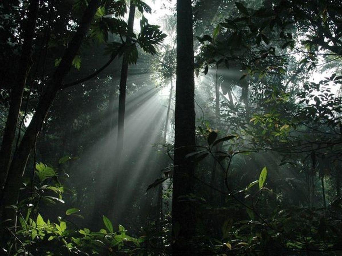 La luz del sol en la selva tropical