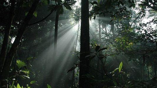 Las selvas más bonitas