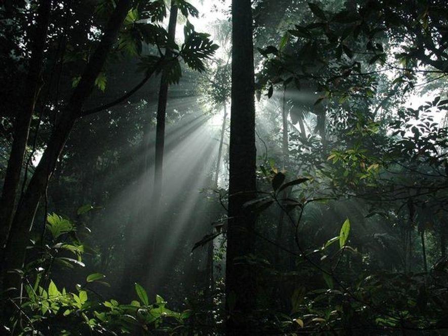 Los rayos de sol penetran en el dosel de un bosque tropical de Indonesia en la ...
