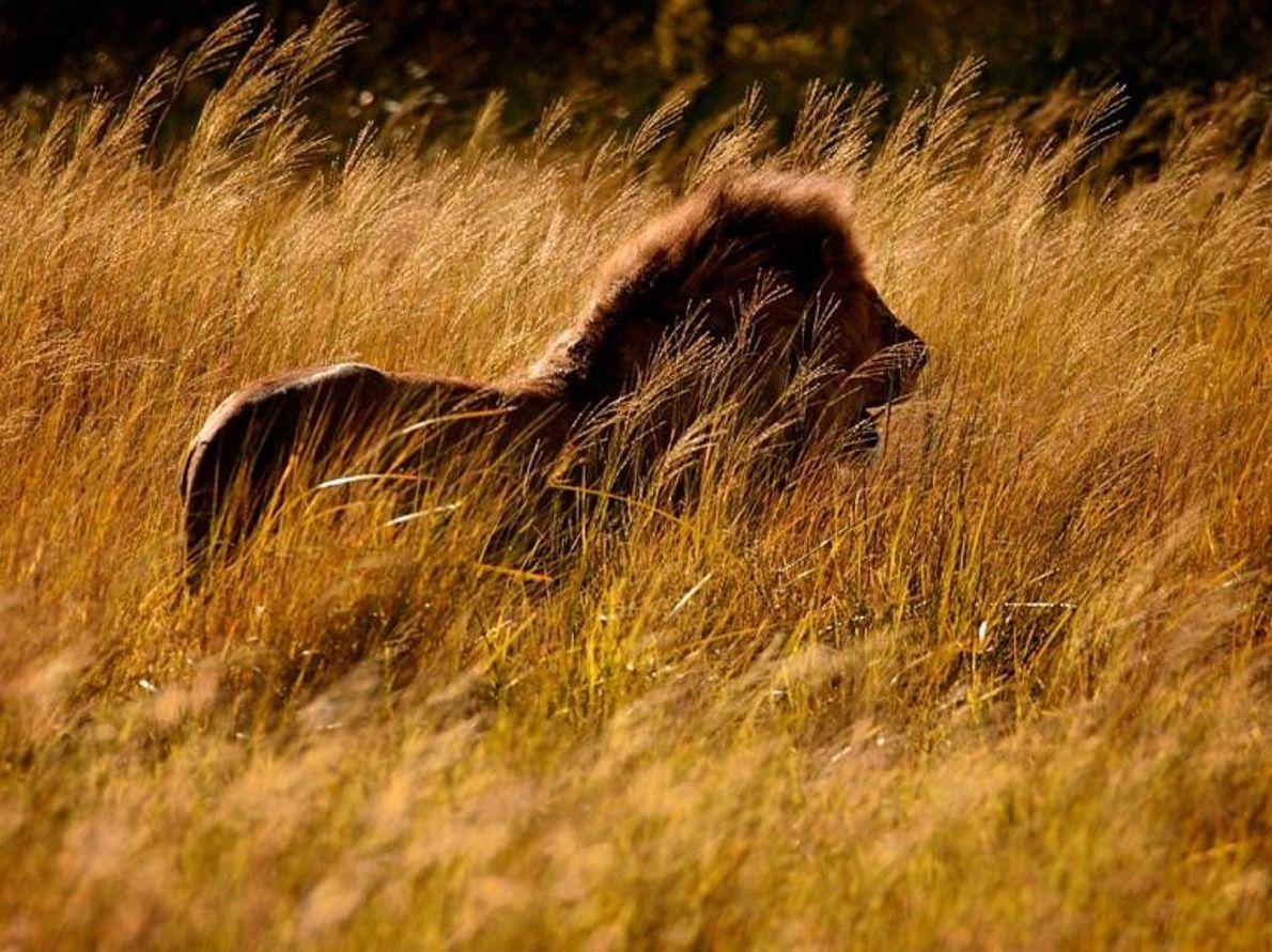 Serengeti, Tanzania