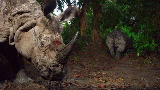 Unos cazadores furtivos matan a un rinoceronte en un zoo de París y roban su cuerno
