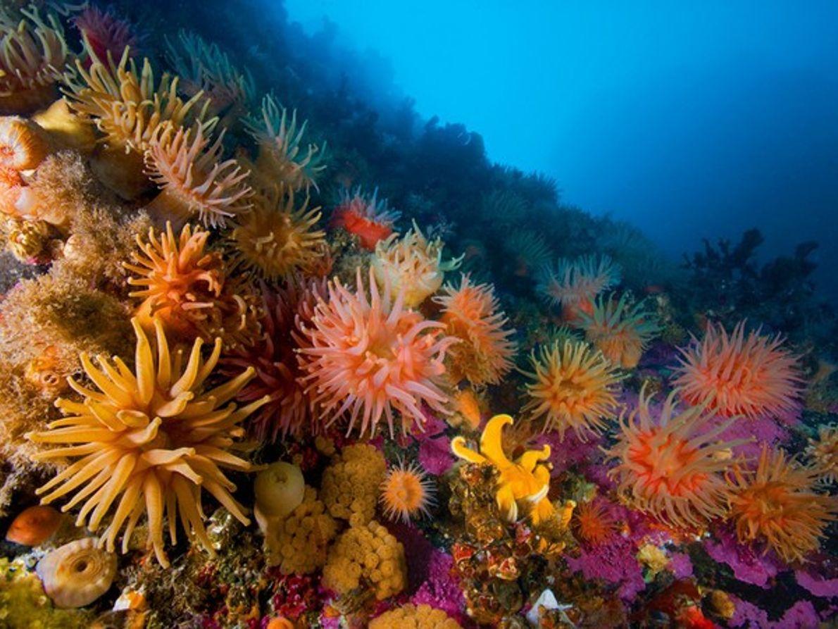 Anémonas y corales