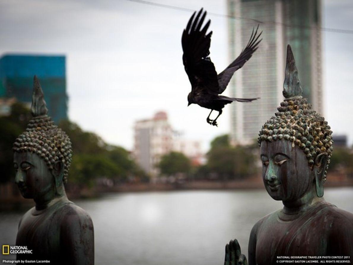Buda y pájaro en Sri Lanka