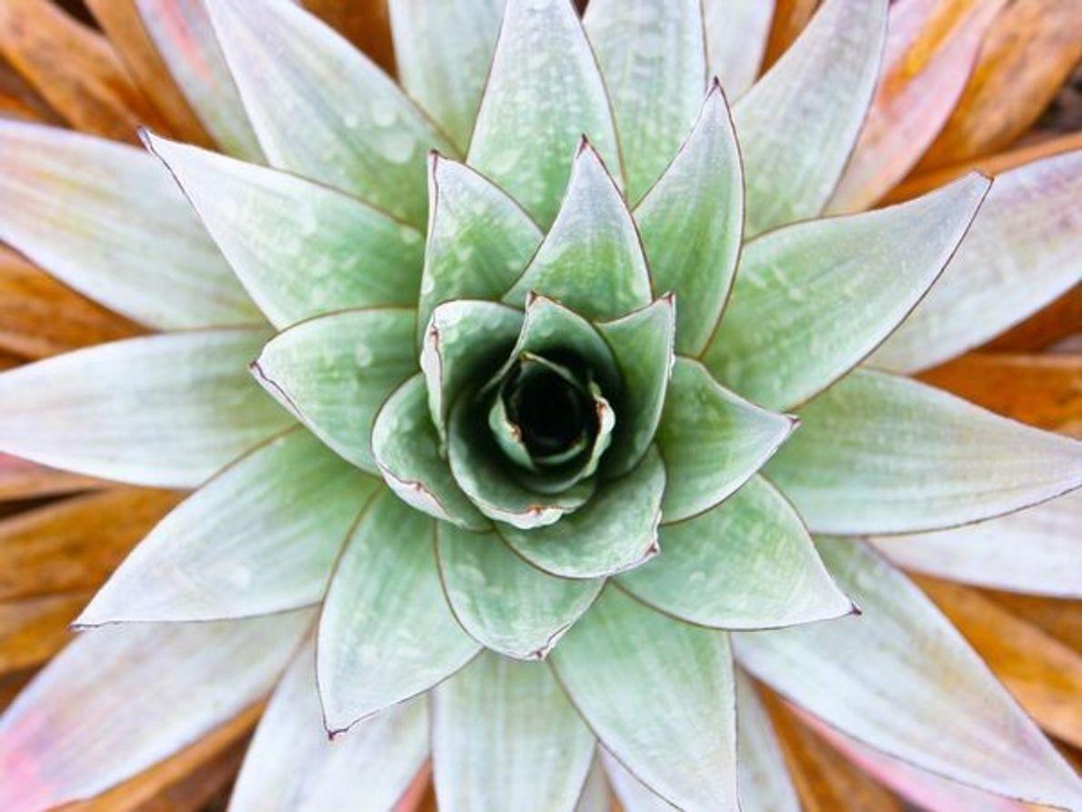 Planta tepuy