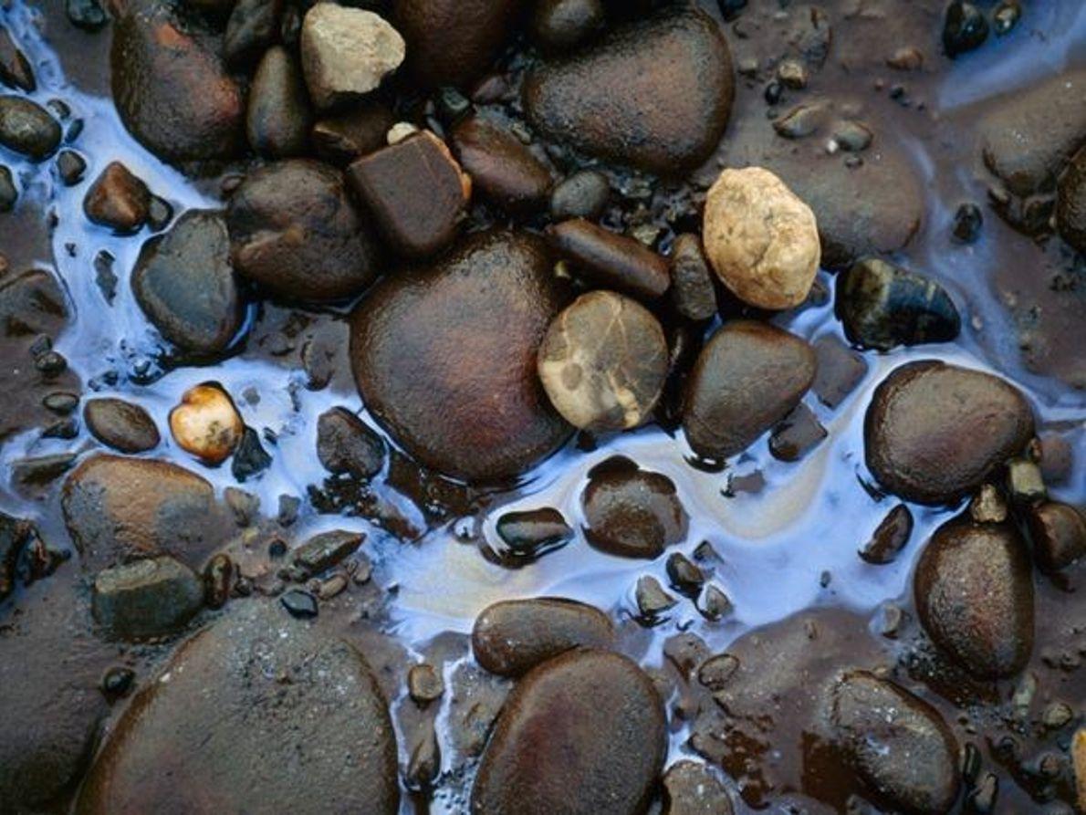 Mancha de aceite, Alaska