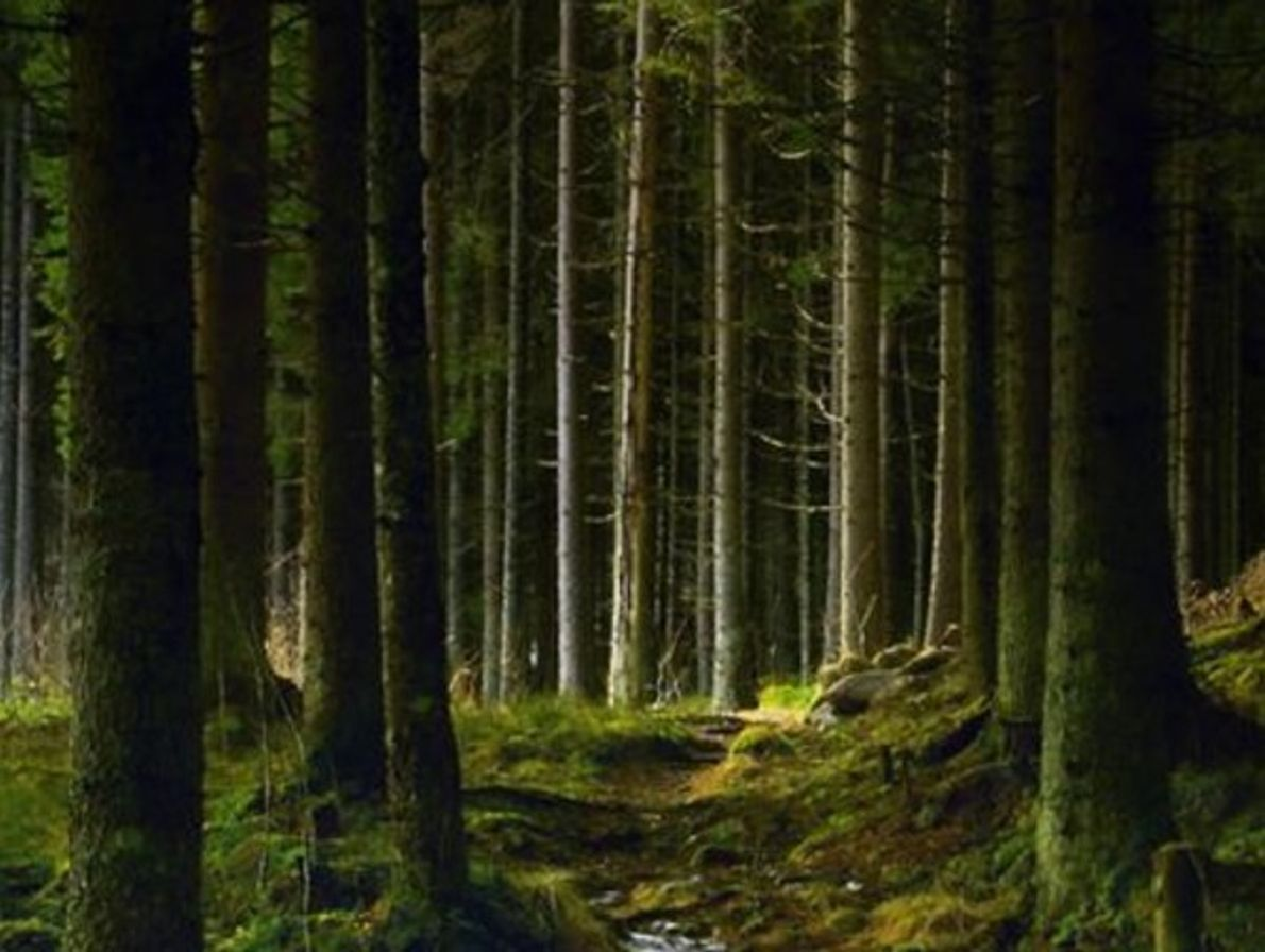 Bosque de Kongsvinger