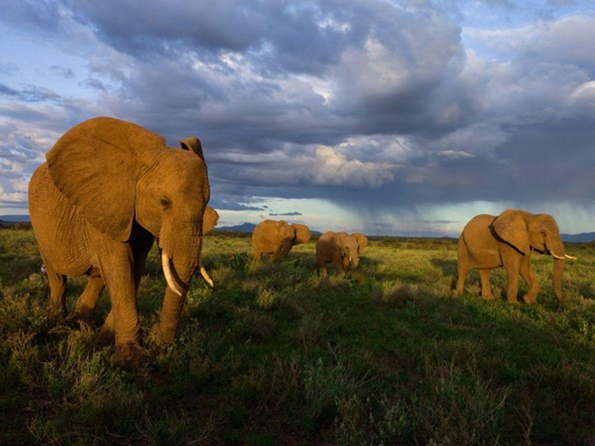 Los elefantes de Samburu, Kenia