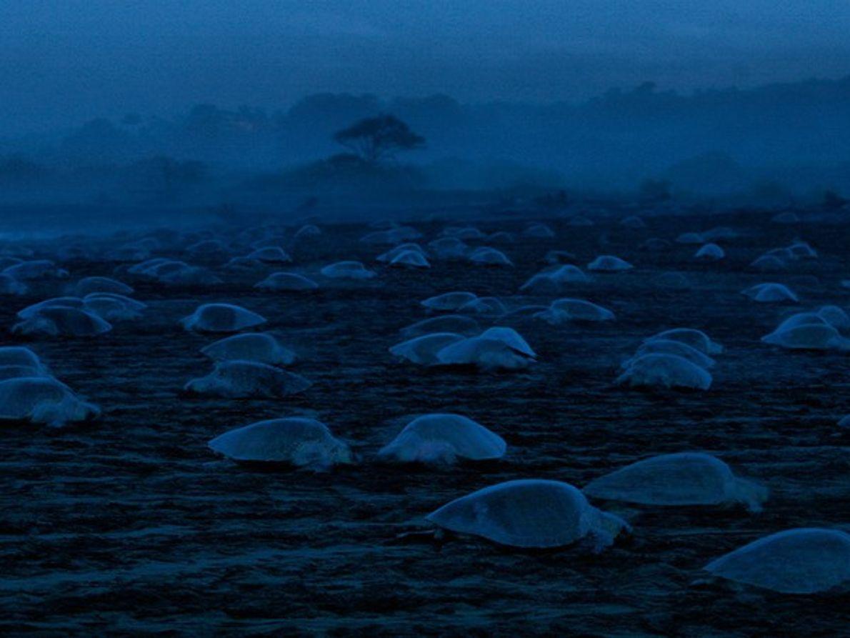Tortugas de noche