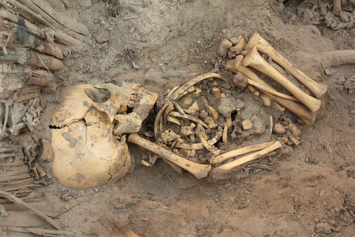 Ver siguiente: Gran tumba en Perú