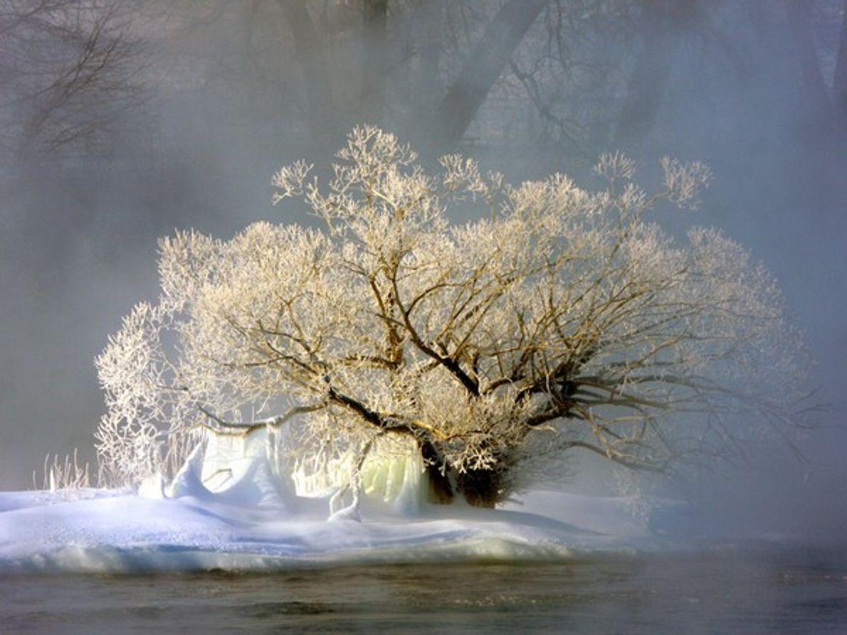 Árbol en el río Richelieu