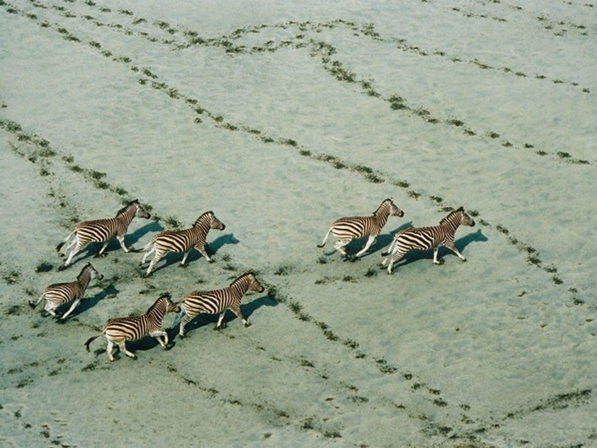 Cebras, Botsuana