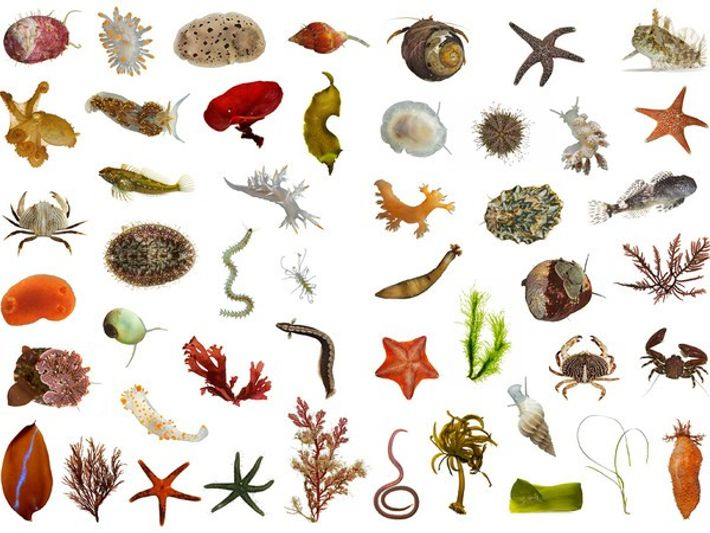 ¿Conocemos solo el 86% de las especies de nuestro planeta?