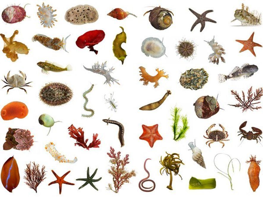 Se desconocen aún el 86 por ciento de las Especies de la Tierra ...