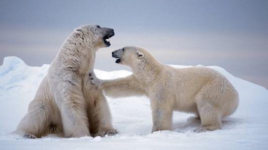 Obsesión Polar