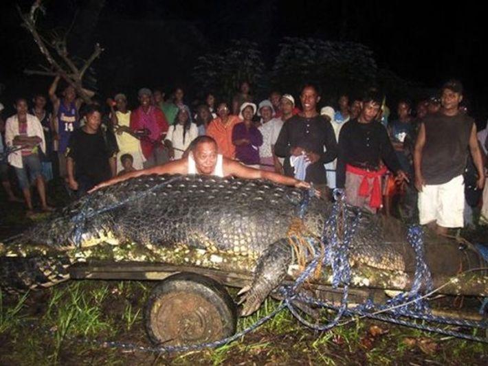 ¿Dónde han encontrado a este cocodrilo gigante?