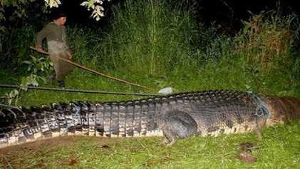 ¿El cocodrilo más grande jamás capturado?