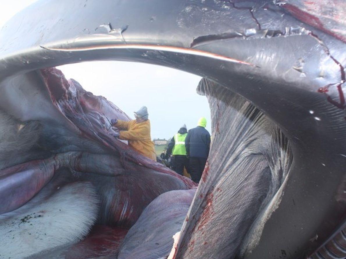 Dentro de la ballena