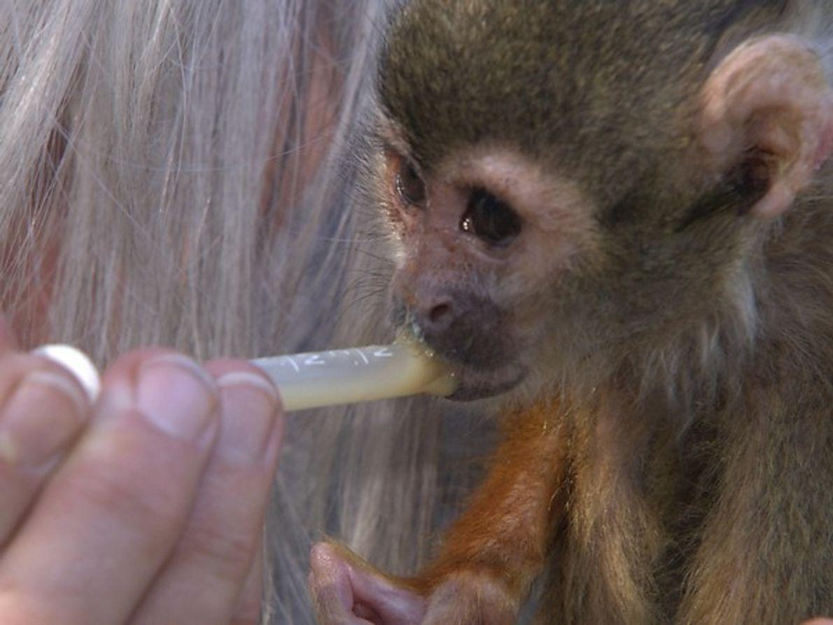 ¿Es bueno intentar domesticar a animales que están hehcos para criarse en su entorno salvaje?