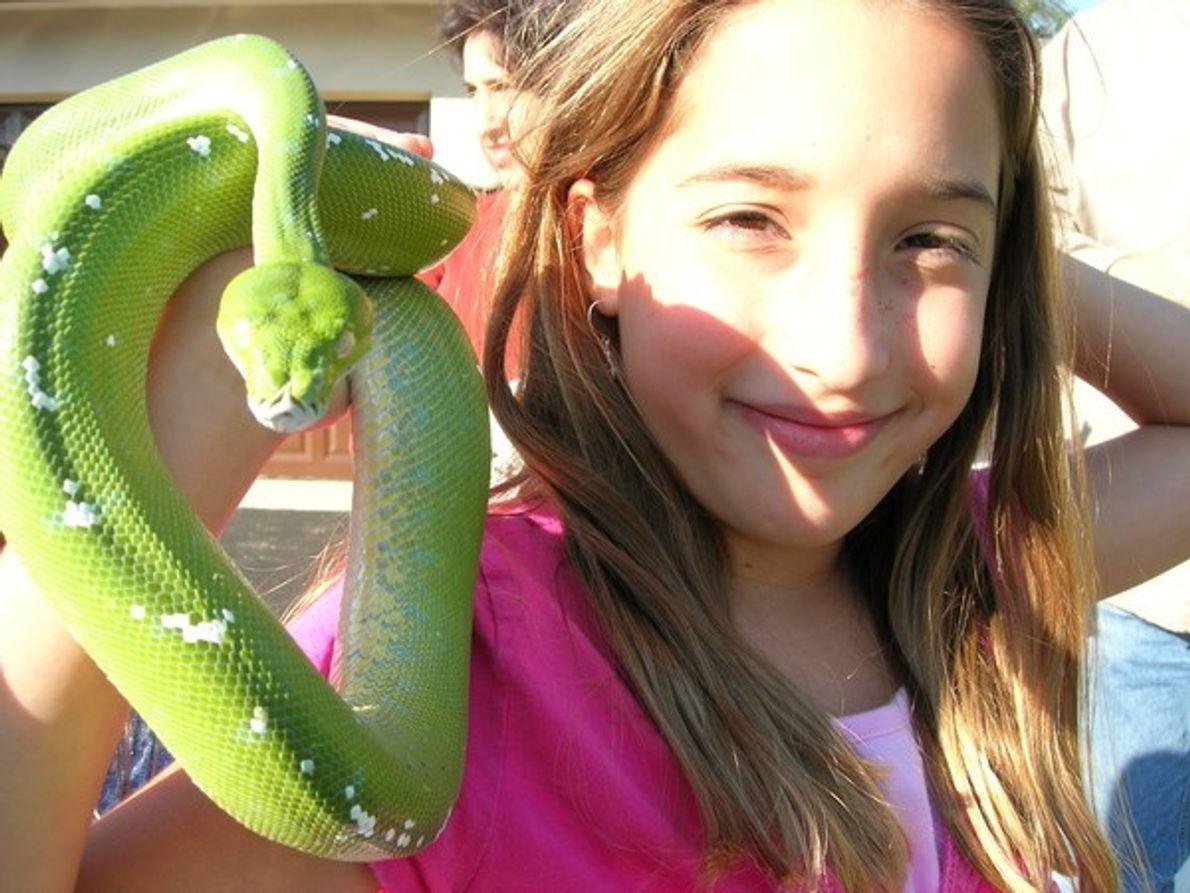 El problema de tener serpientes como animal doméstico es que muchas familias de EE.UU las …