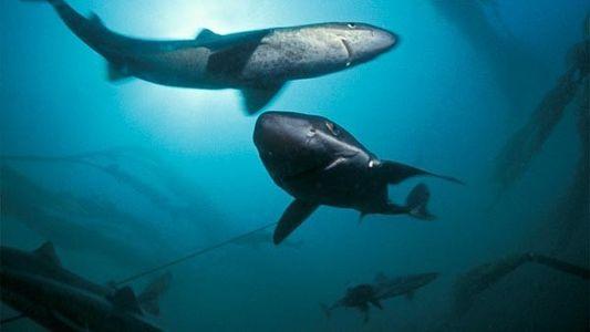 Los tiburones también atacan a los virus