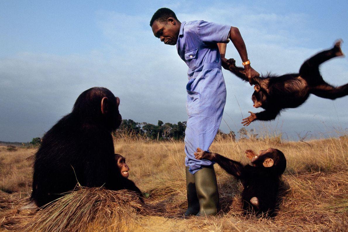Chimpancés y cuidador