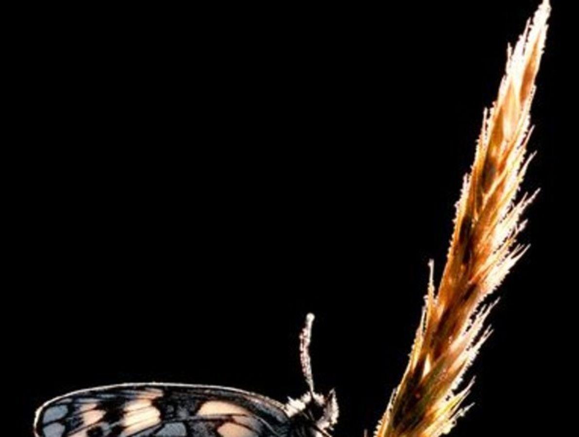 """Estaciones del año: """"Los insectos de verano"""""""