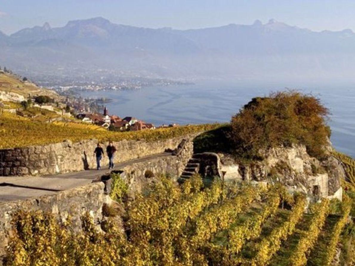 Los Viñedos  Lavaux, Suiza