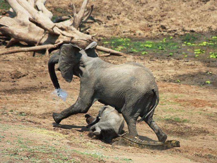 El elefante se escapa