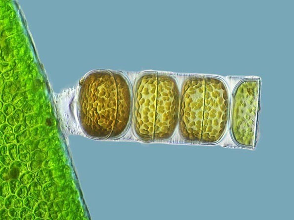 3º Puesto: Algas