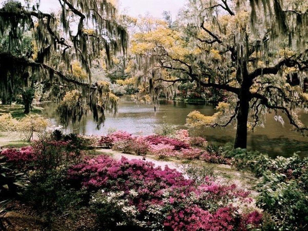 Middleton Gardens, Carolina del Sur