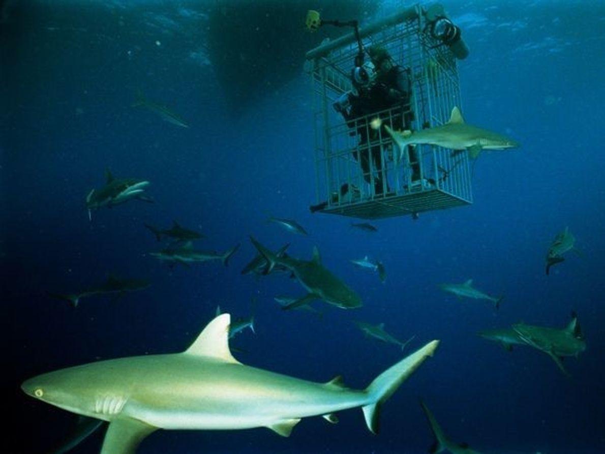 Los tiburones, las Islas Marshall