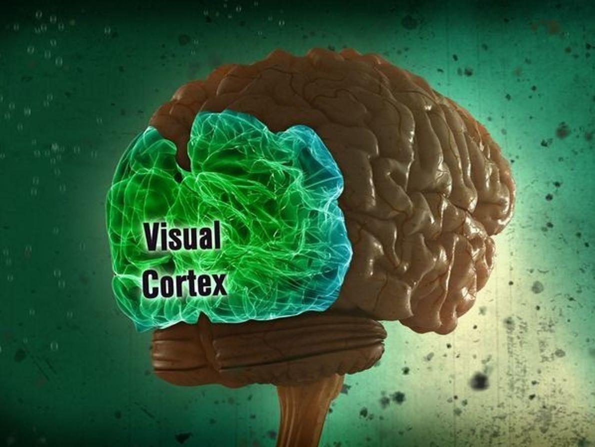 La corteza visual