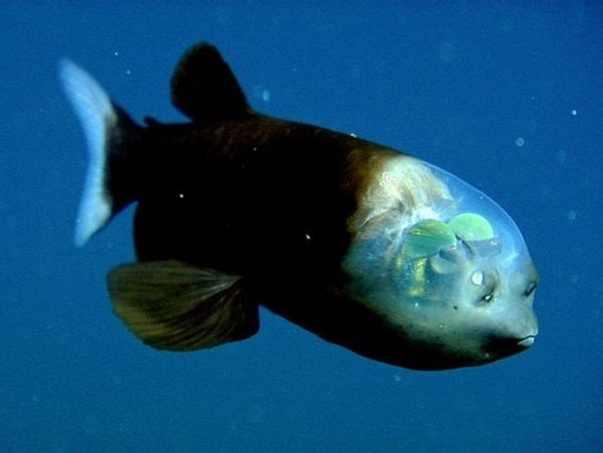 Un pez al que se le ven las ideas