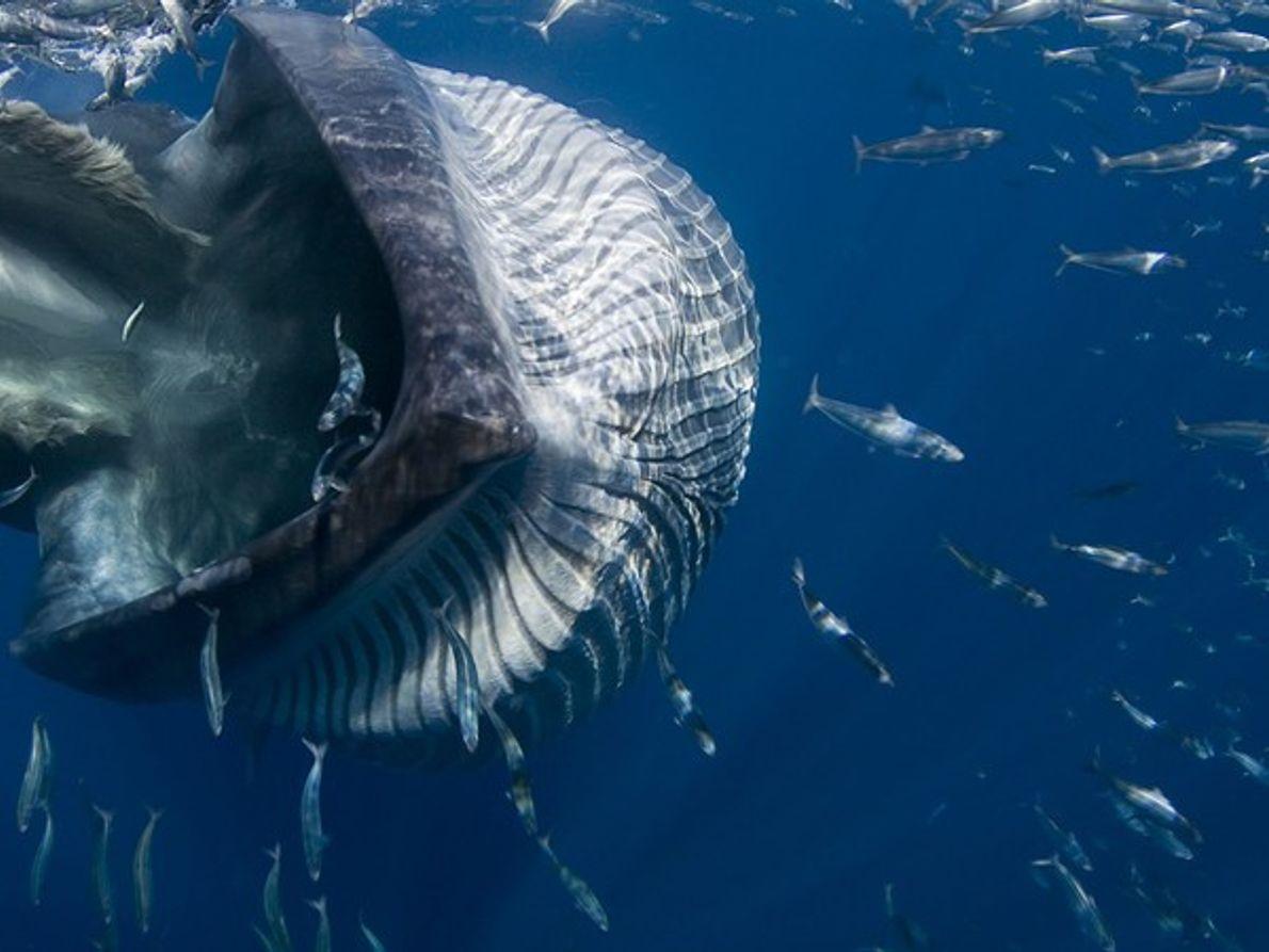 Finalista Mundo submarino: Garganta del Gigante