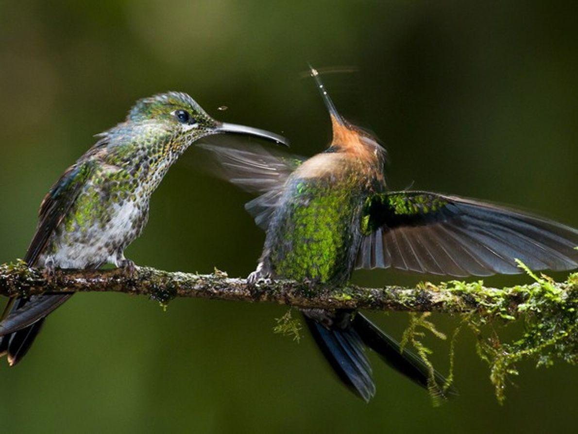 Finalista Naturaleza Mundial: Touché