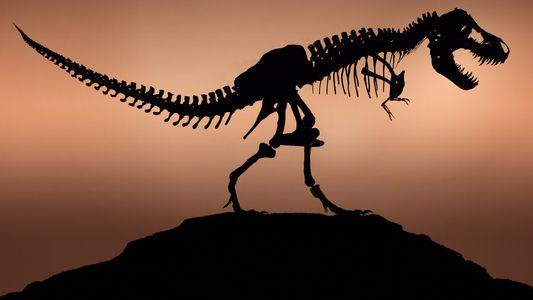 ¿Se parecían los tiranosaurios reales a los de Parque Jurásico?